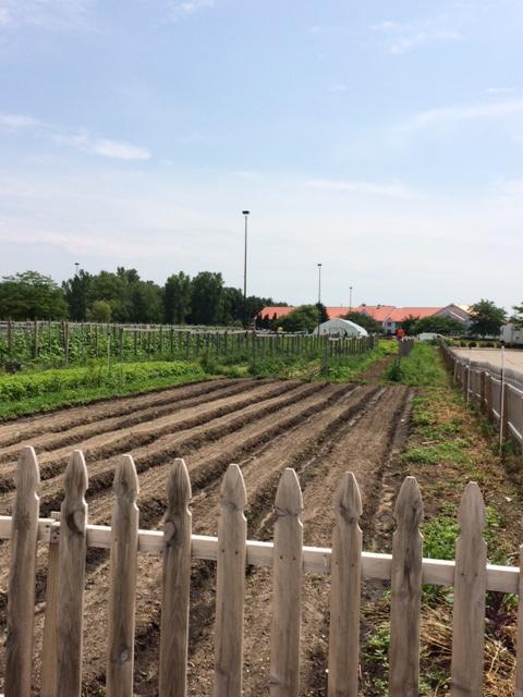 eigthdayfarm