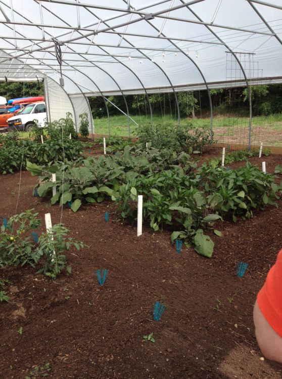 growinggreenhouse