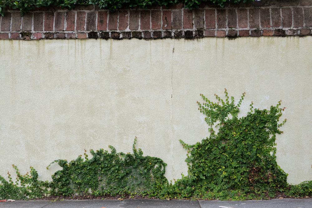 Wall & Ivy
