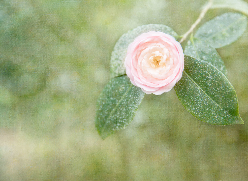 In Bloom 5