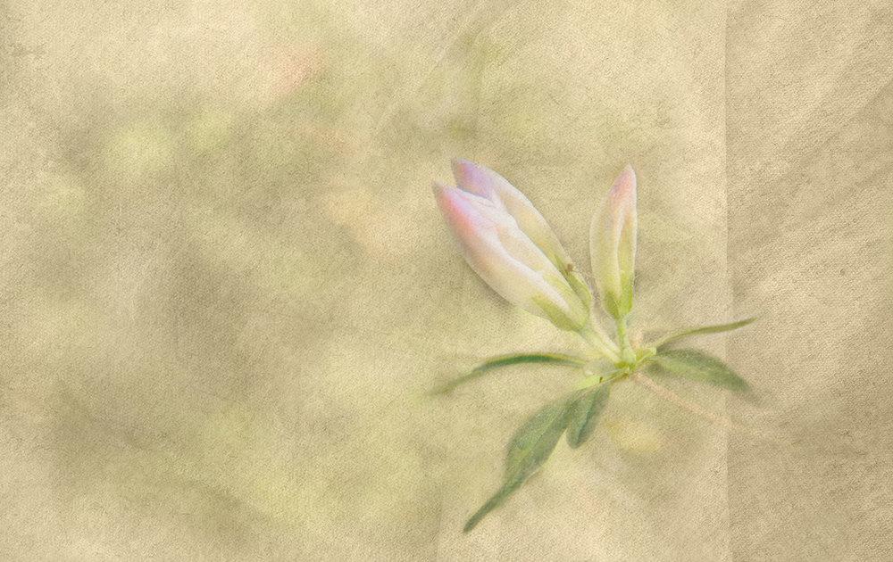 In Bloom 6