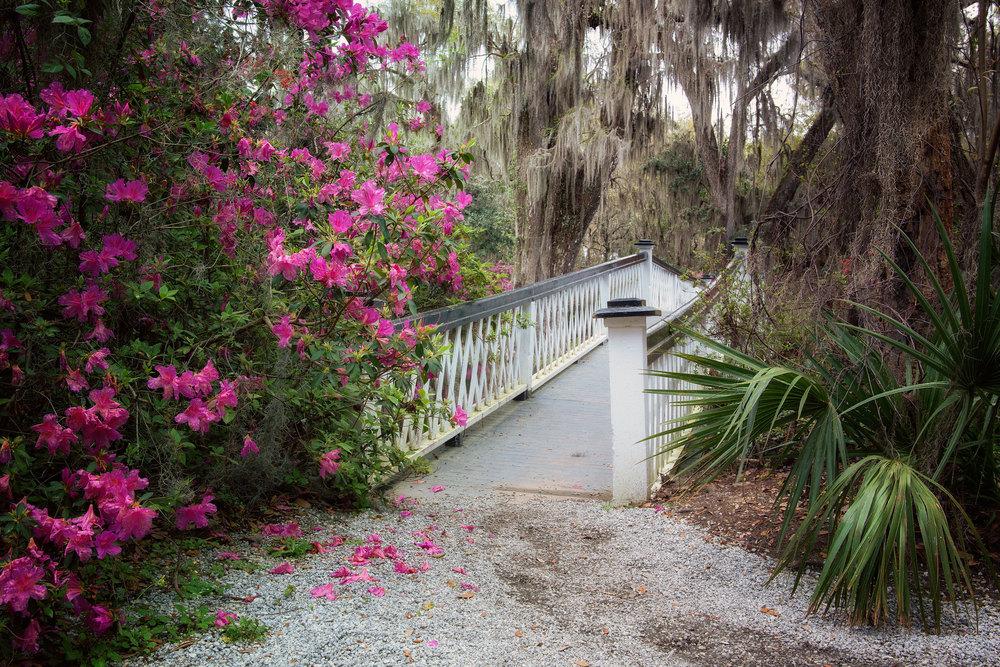 Bridge & Azaleas