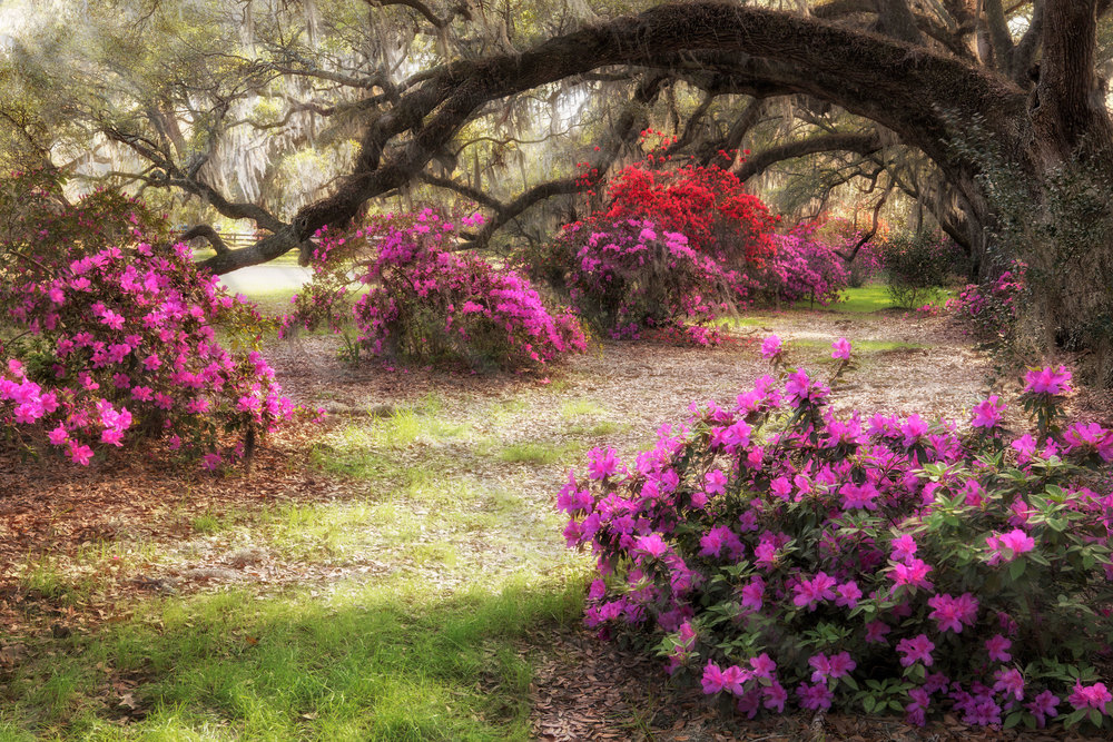 Charleston-Spring-20.jpg