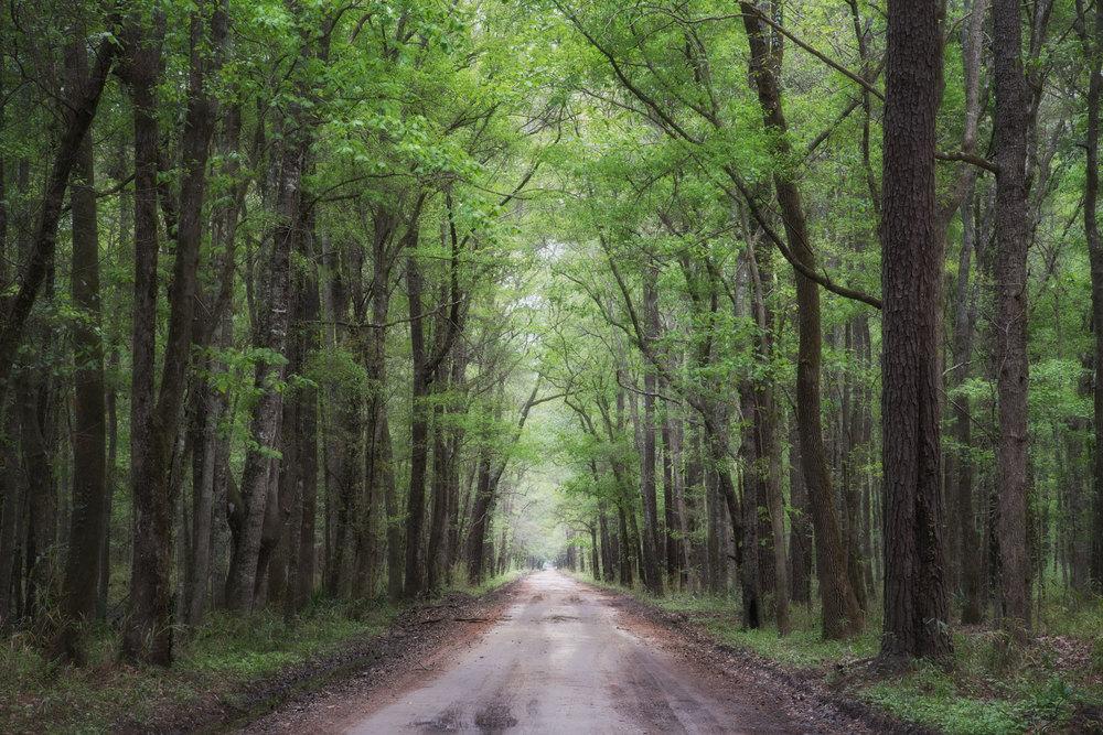 Pine Road