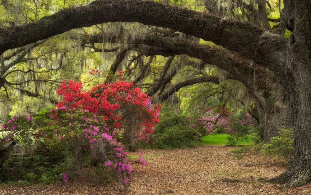 Spring In Charleston 2