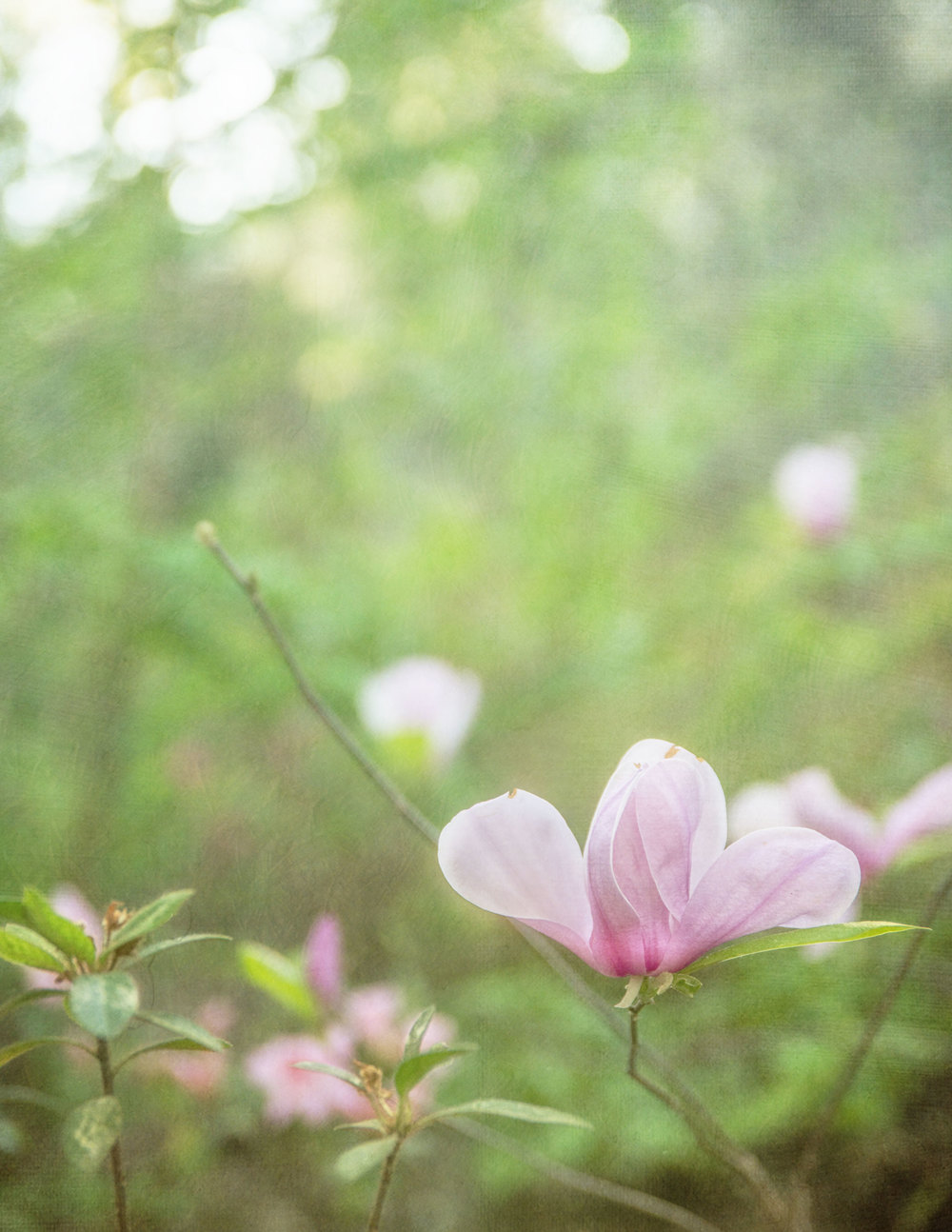 In Bloom 7
