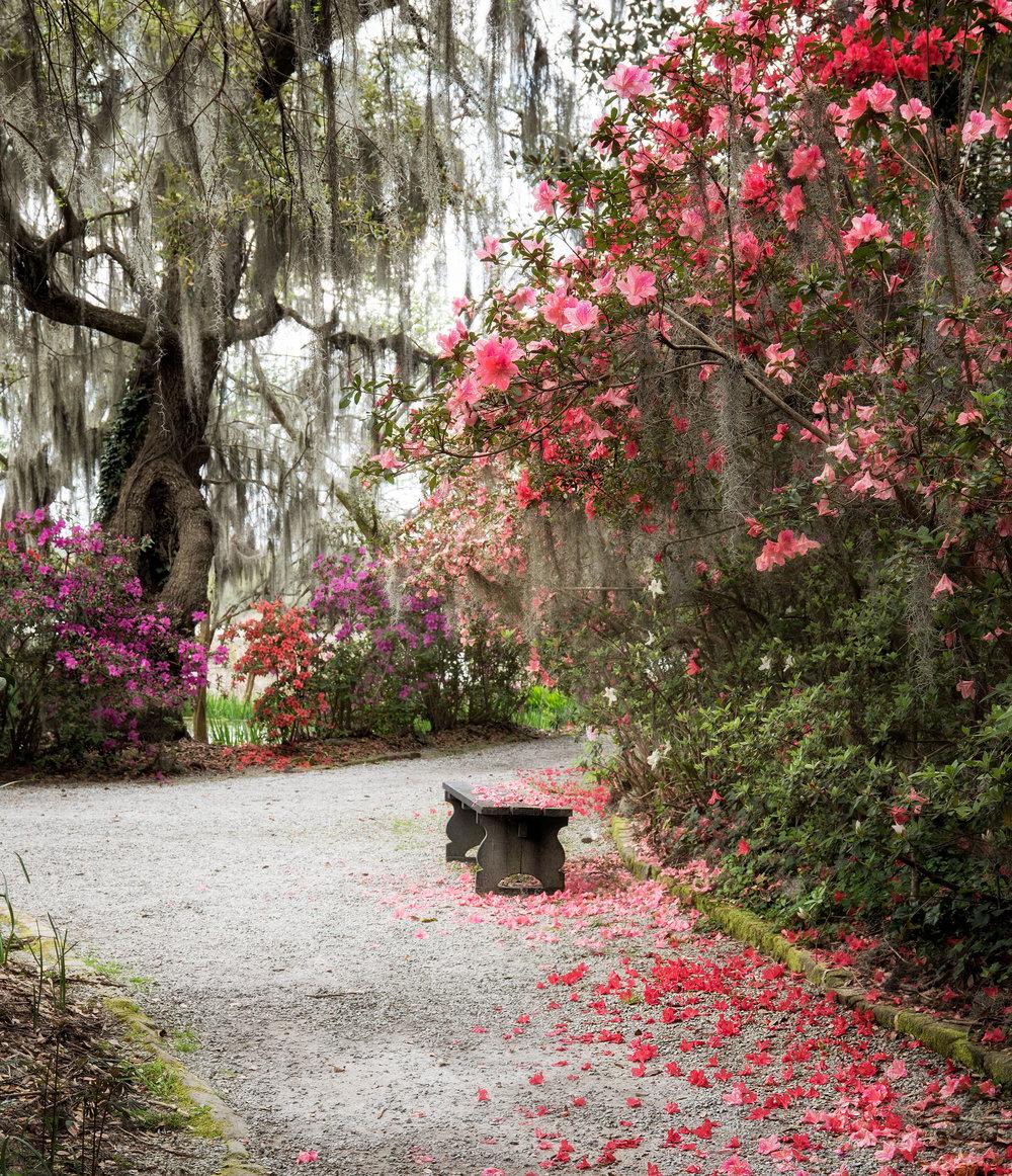 Charleston-Spring-15.jpg