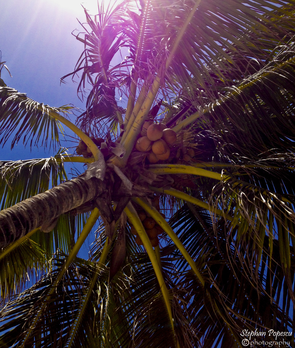 Nothing screams paradise more than relaxing under a palm tree with a drink in hand. It's times like this that can make it hard to come back home after all is said and done.