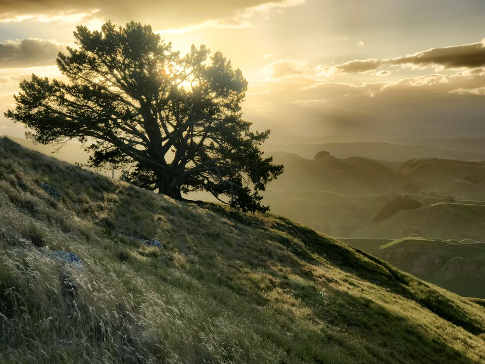 tree-mata-peak-new-zealand-north-island