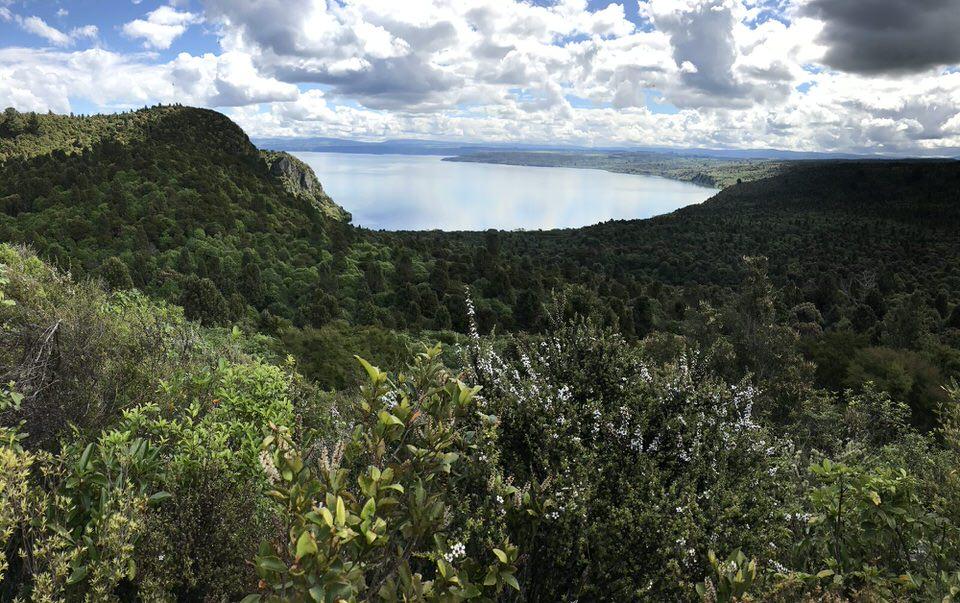 Kawakawa-bay-lake-taupo-new-zealand
