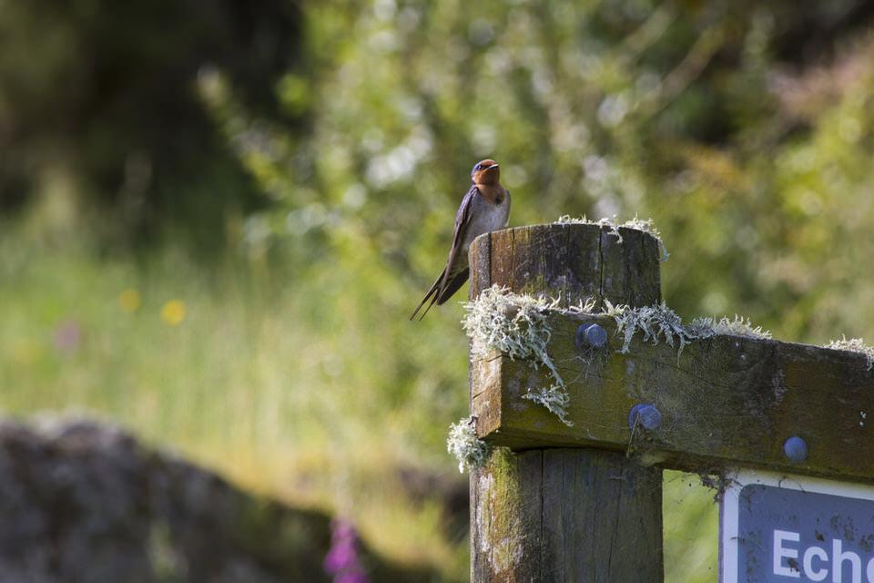 bird-new-zealand-north-island