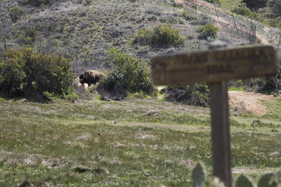 buffalo-trans-catalina-trail