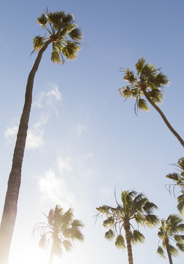palm-trees-catalina-island