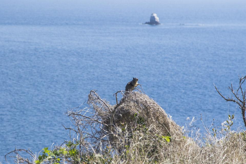 small-animal-catalina-island