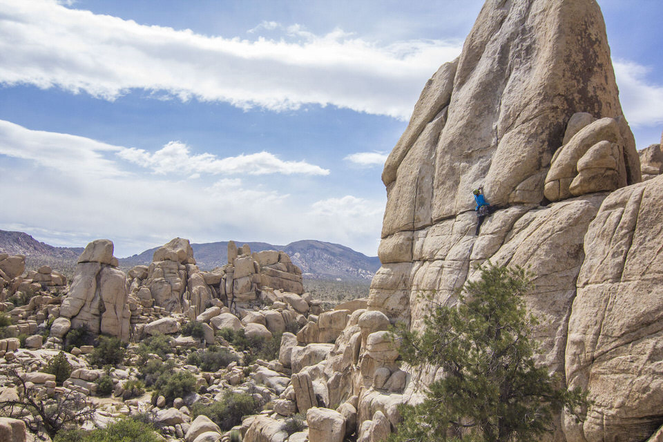 There are 4 reservable campgrounds at Joshua Tree.