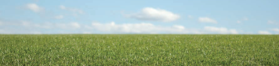 sky_grass1.jpg