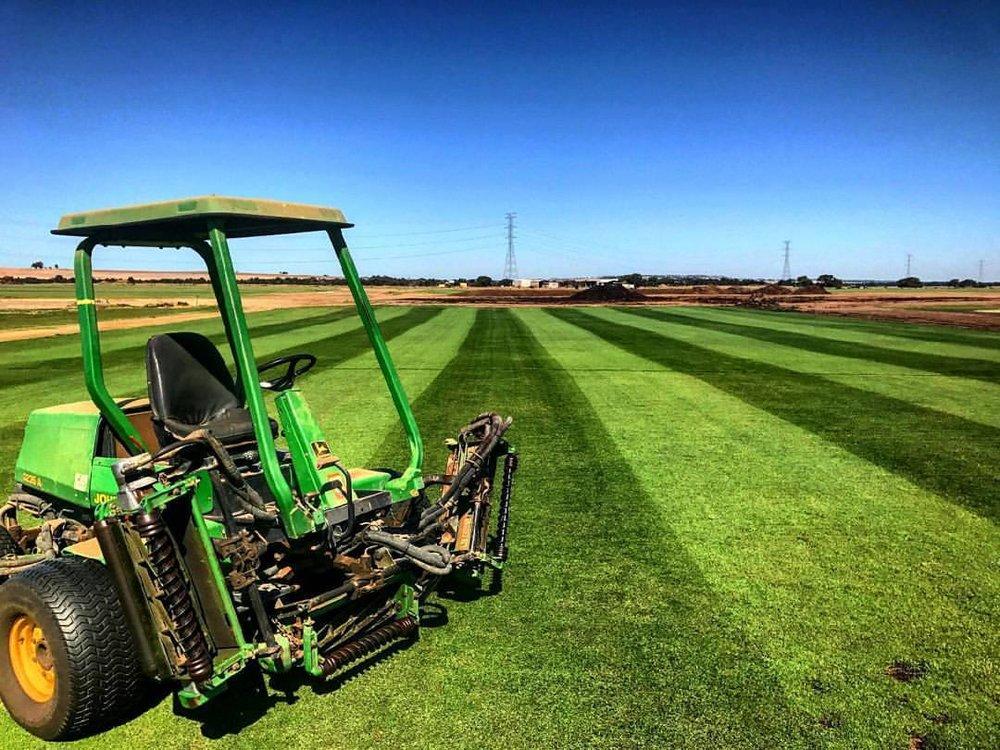 Turf Farm - grass stripes.jpg