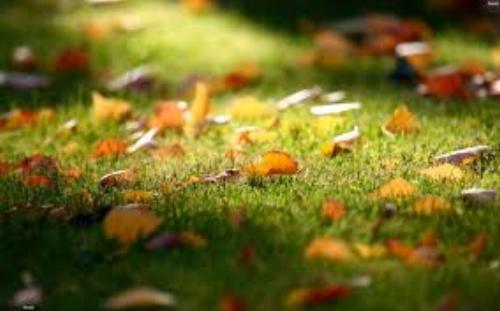leaves on lawn.jpg