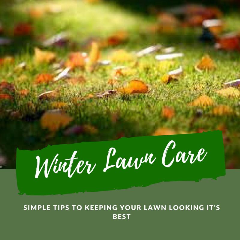 Winter lawn care; Superior Lawns Australia
