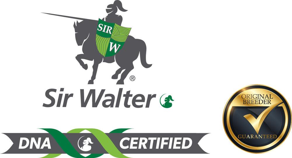 SirWalter-DNA_OB_RGB.jpg