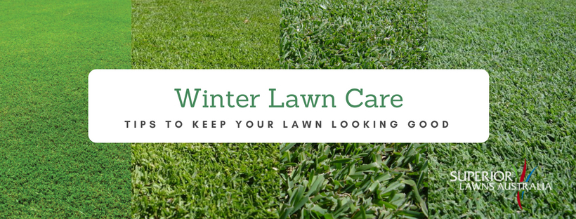 Perth winter lawn