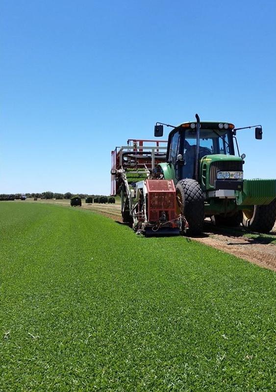 turf farm cutting.jpg