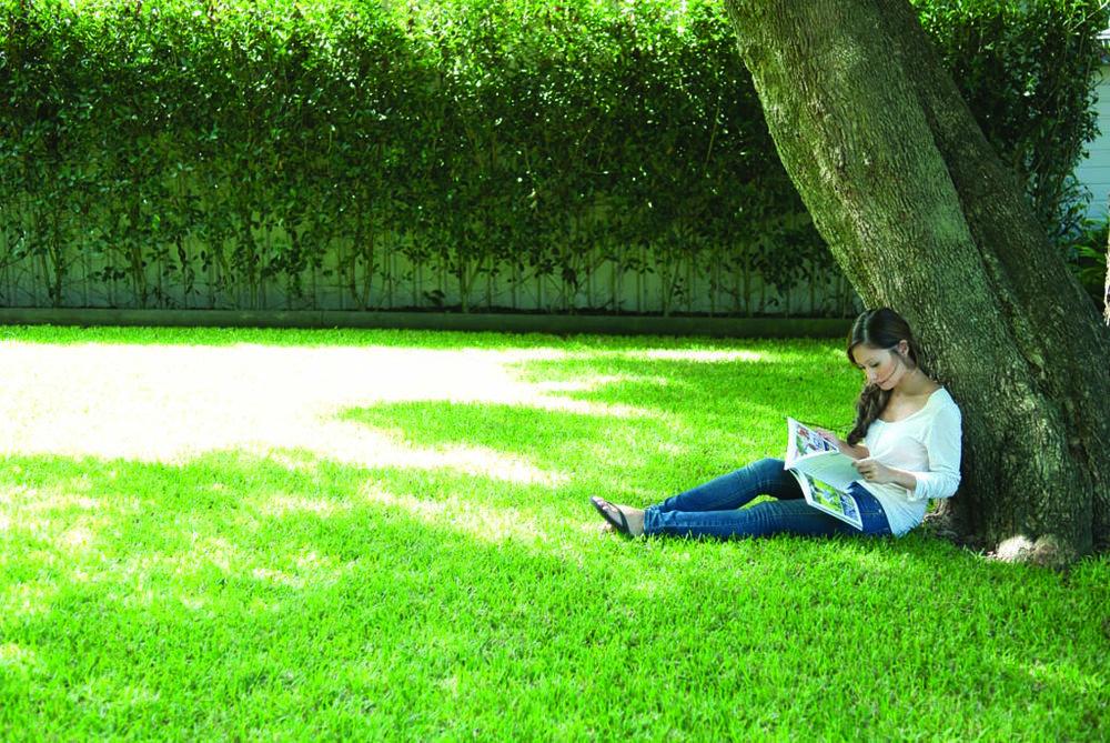 bianca_tree_shade2.jpg