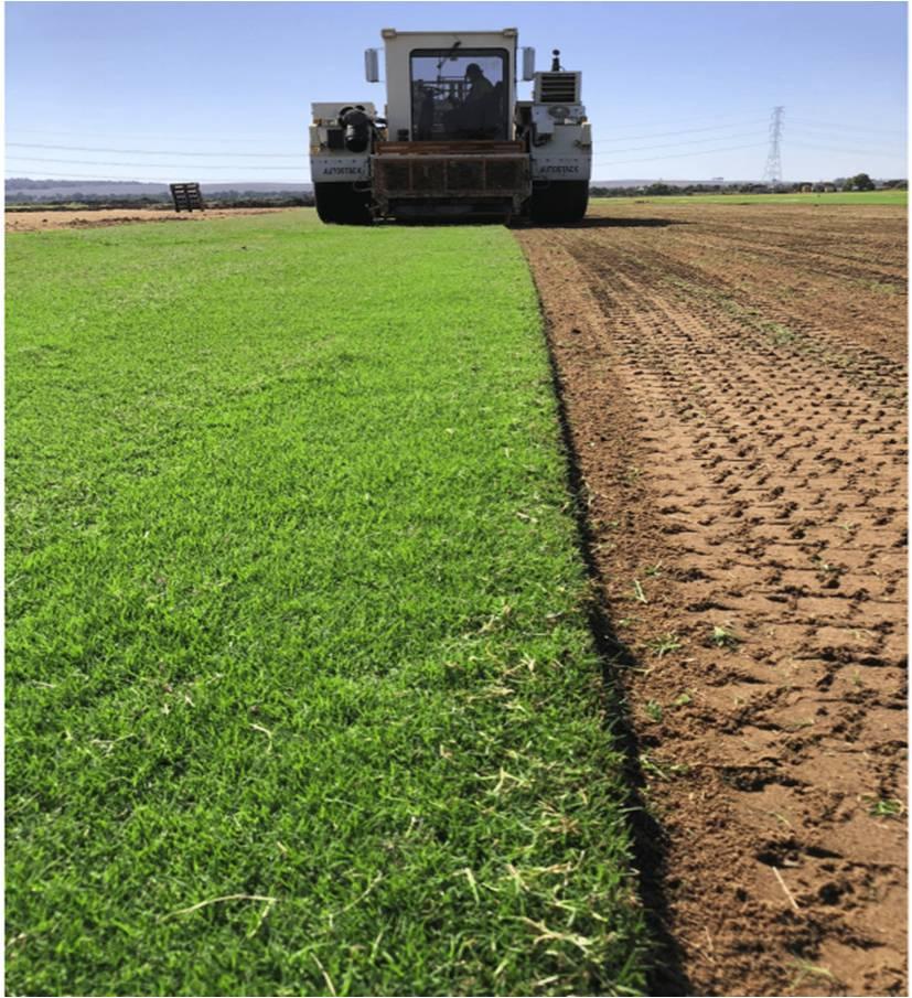 Harvesting TifTuf.jpg