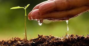 soil wetter.jpg