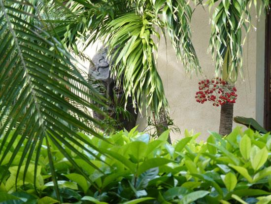 birdofparadise_gardens15.jpg
