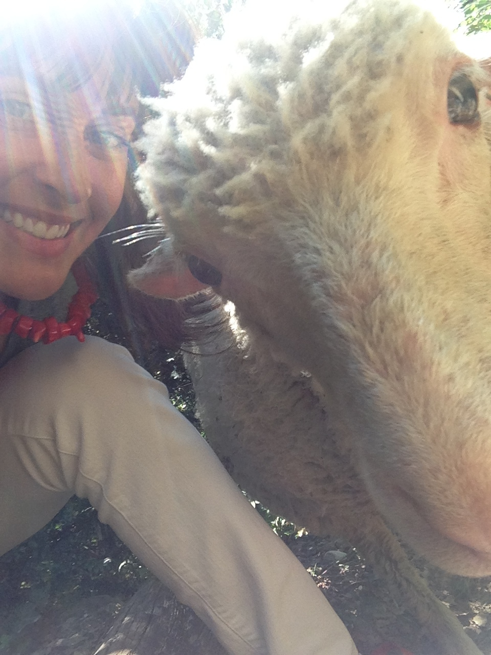 Selfie with a Sheep