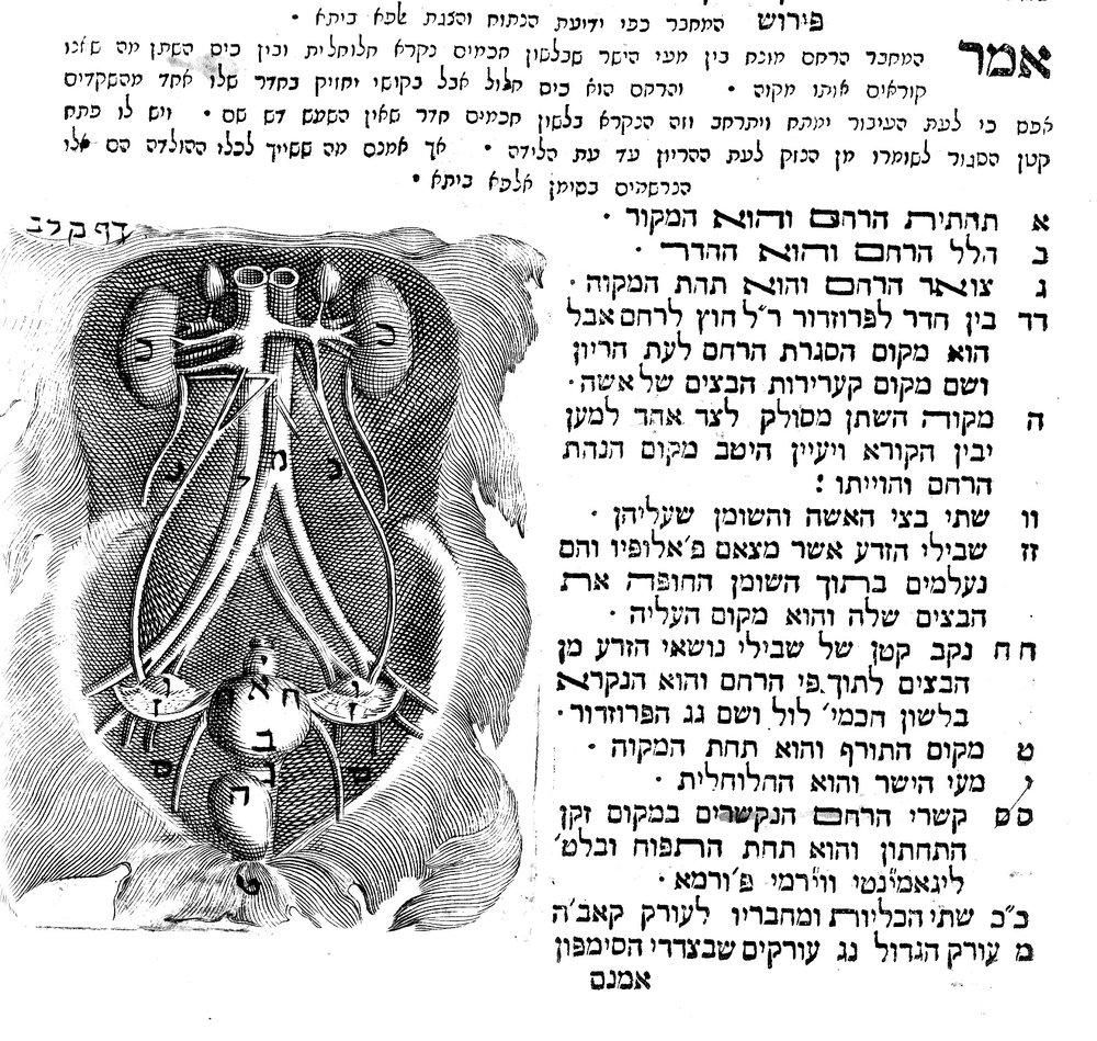 Detail from Tuviah HaCohen,  Ma'aseh Tuviah , Venice 1708. p132b.