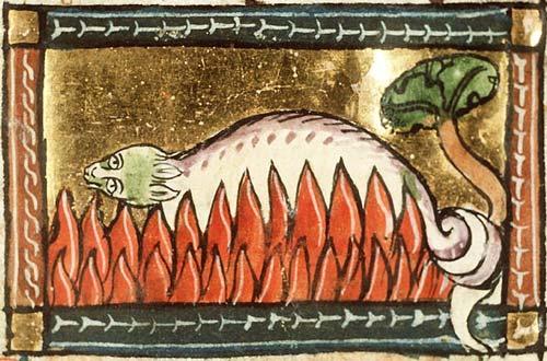 A salamander unharmed in the fire. From Koninklijke Bibliotheek, KB, KA 16, Folio 126r, c 1350. From  here .