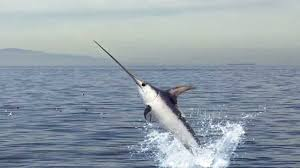 Image of Swordfish.jpeg