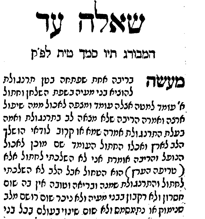 "Opening paragraph of the famous responsa on ""the chicken that had no heart"". From שו׳ת חכם צבי, Amsterdam 1712."