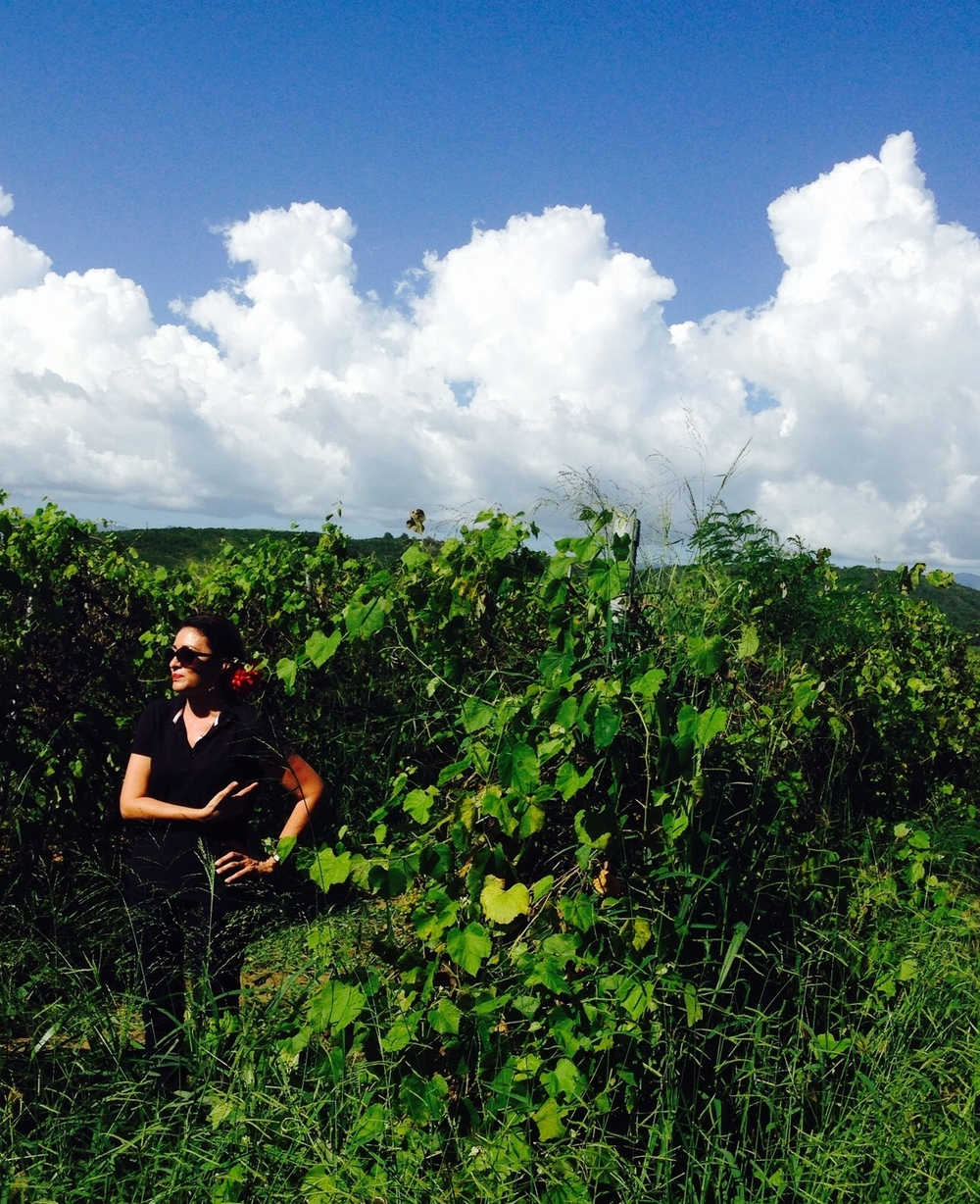 Our lovely tour guide in the vineyard.