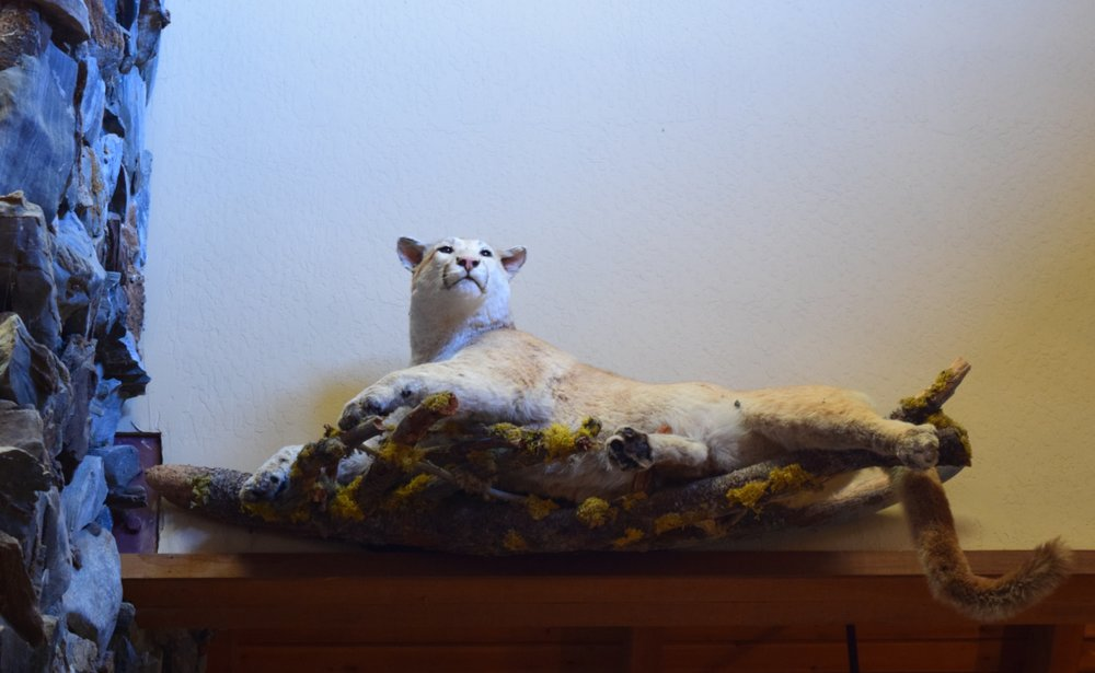 This taxidermy has the same regal attitude as our cat, The Empress Desdemona of Champagne. She's a bit more lively.