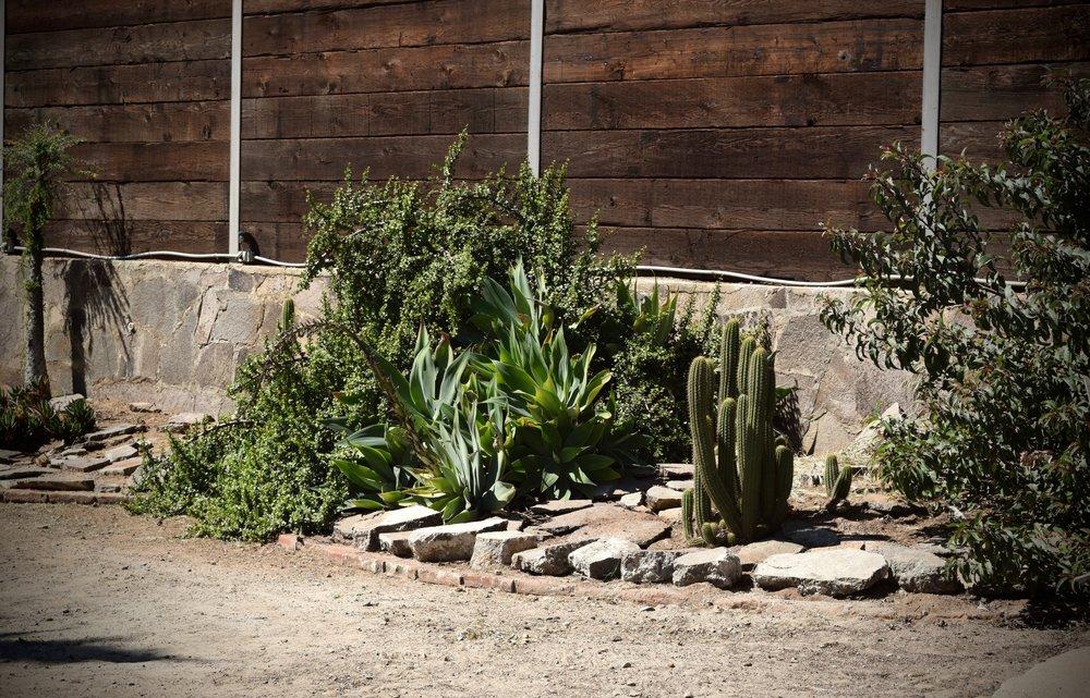casa de piedra- cacti & succulents.jpg