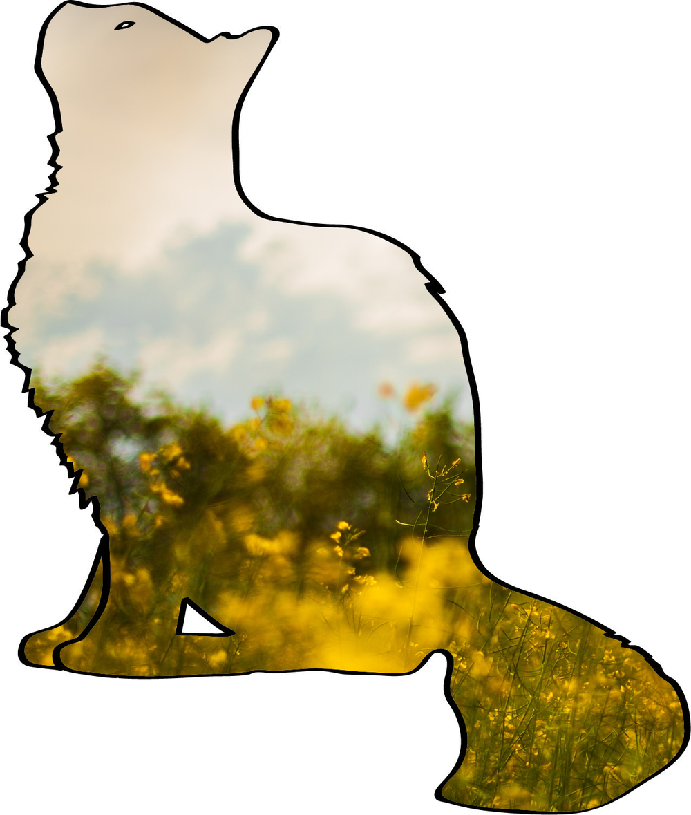 the-new-delia-logo.png