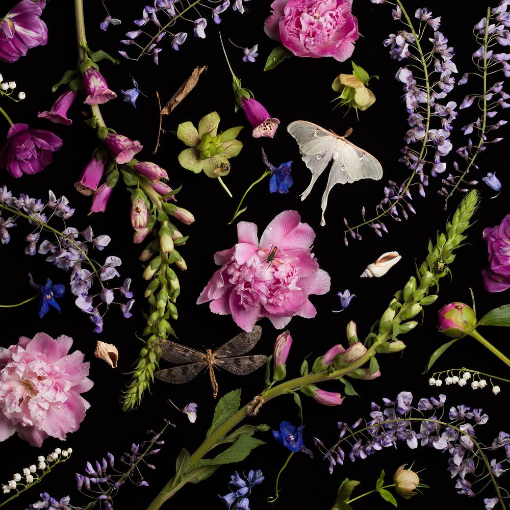 Botanical V (Wisteria and Peonies) © 2013 Paulette Tavormina