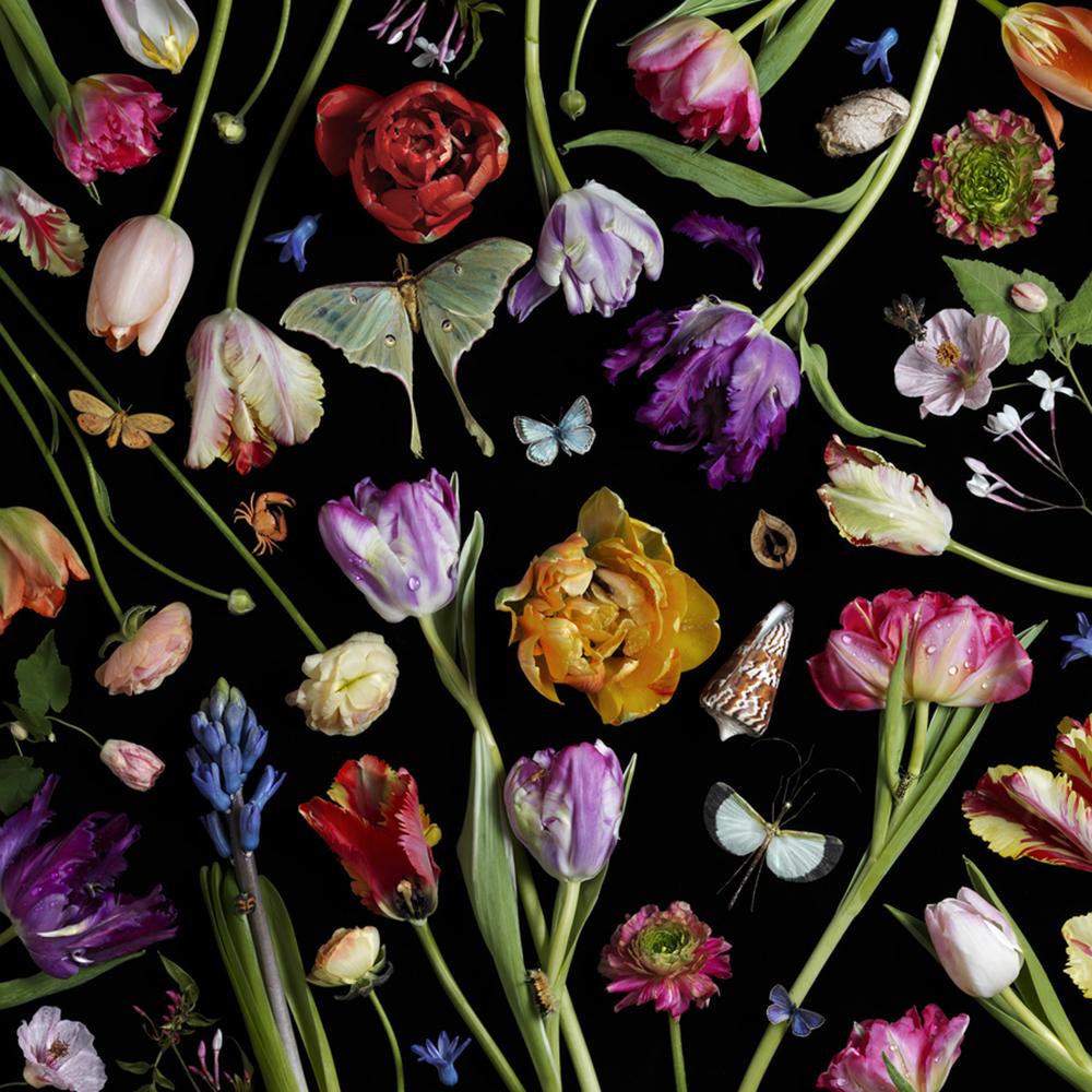 Botanical VII (Tulips) © 2014 Paulette Tavormina