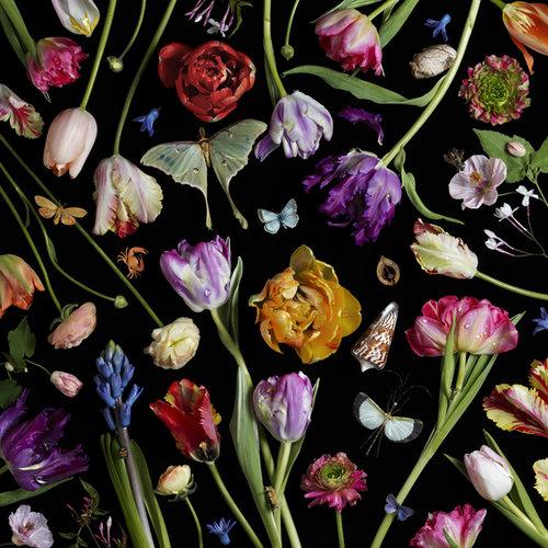 Paulette+Tavormina+Botanical+VII+(Tulips)-1.jpg