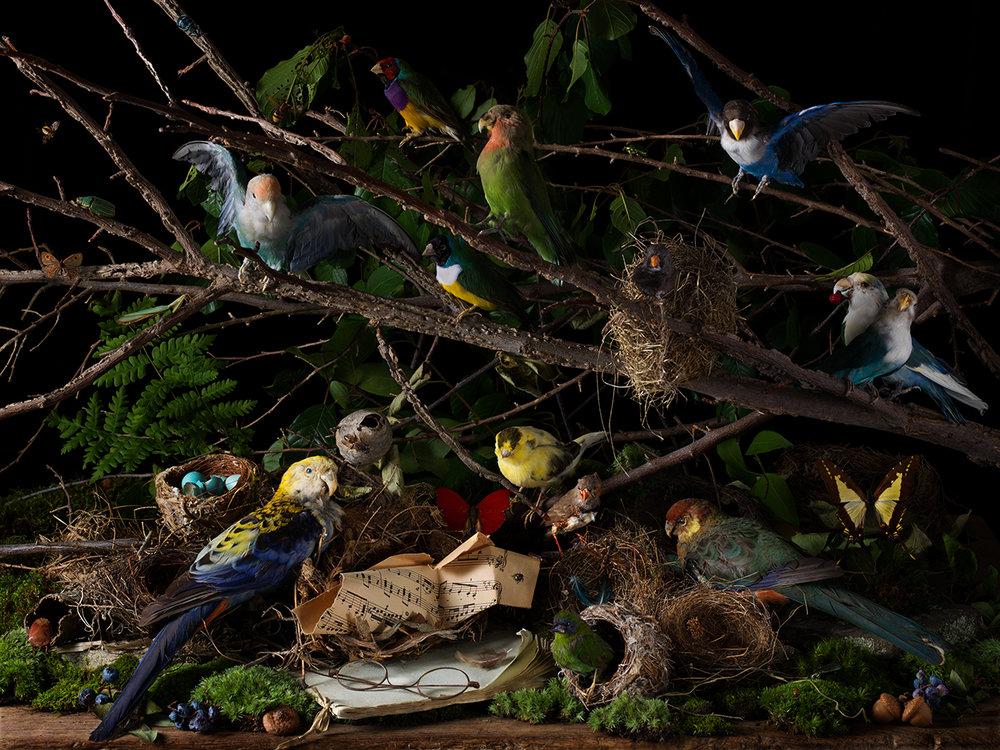 Concert of Birds, 2018