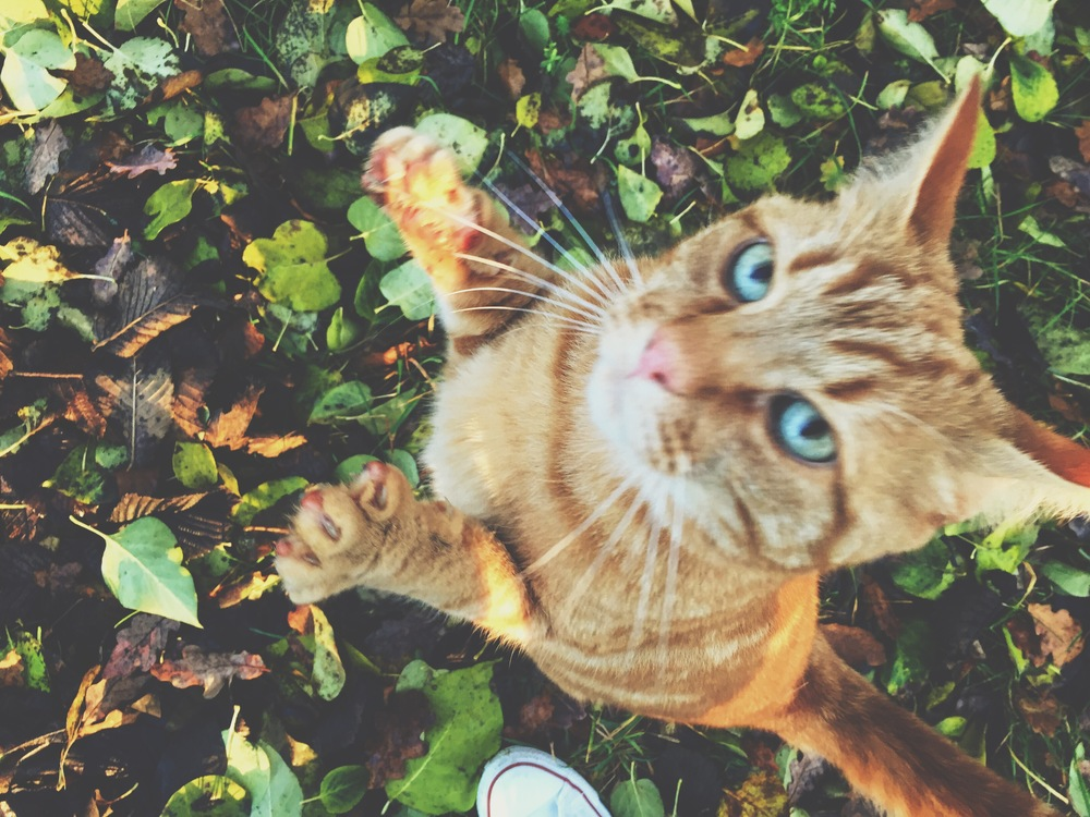 This cat literally jumped up at me while I was taking this picture. New friend!
