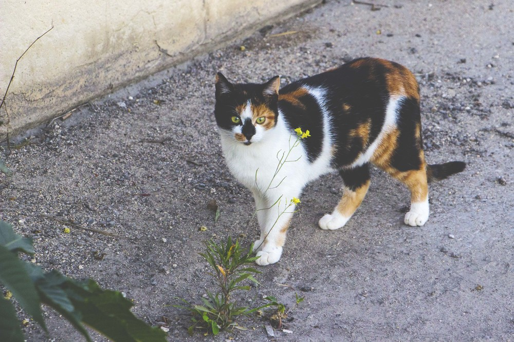 Malta is weirdly known for it's cat population. We were unaware before arrival but they were hard to miss around the city.