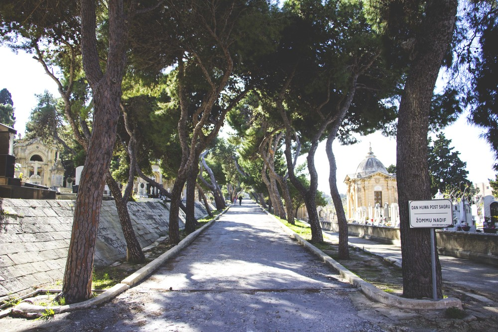 Trees lining the path inside the Malta (Capuccini) Naval Cemetery.
