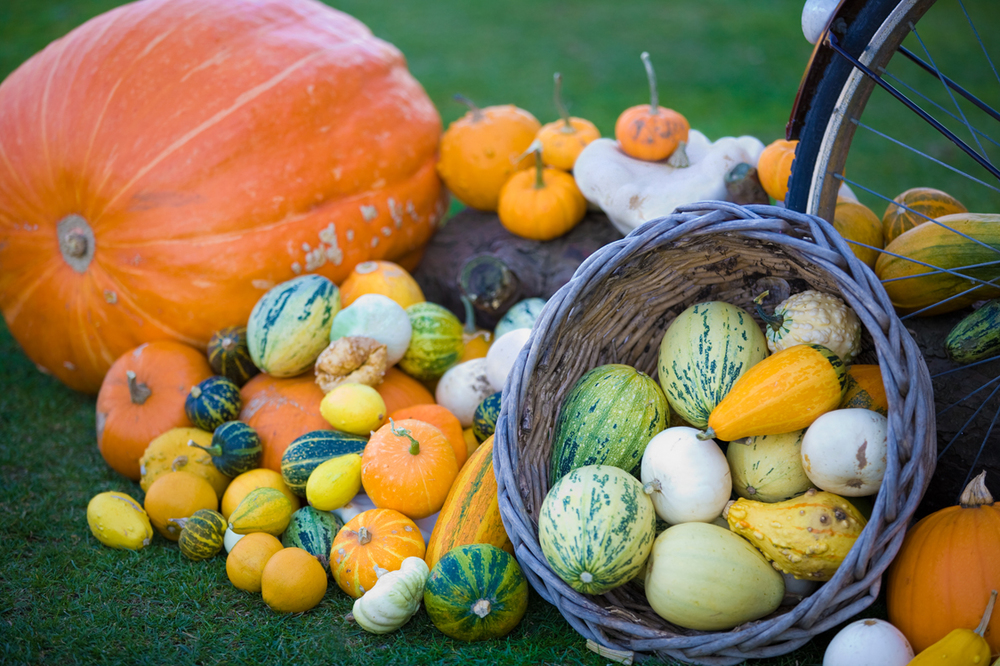 An array of homegrown squashes make a beautiful Autumnal display. Image courtesy of  Mirror Imaging Photography