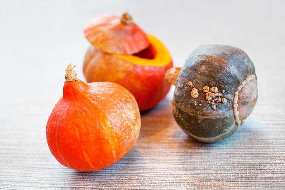onion squash.jpg