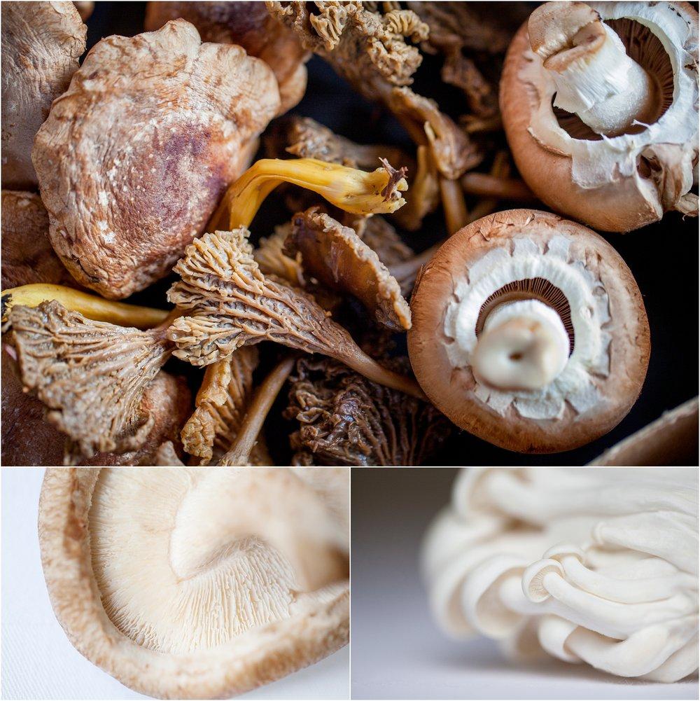 wild mushrooms.jpg