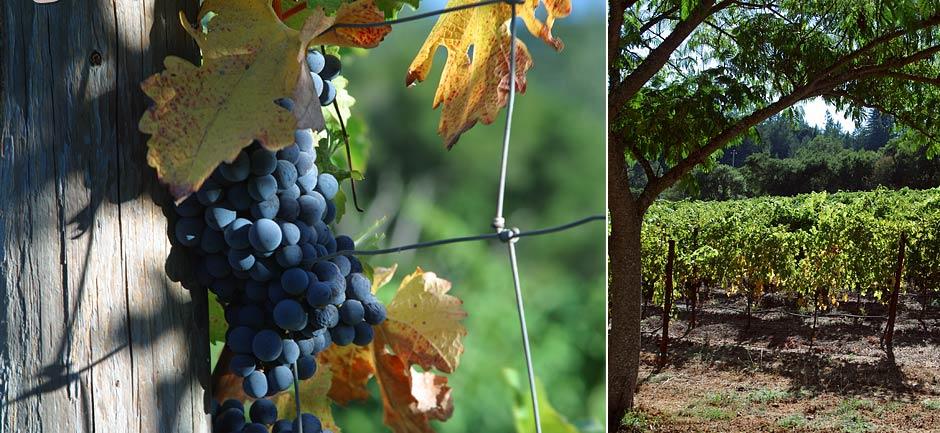 pic_wine_5.jpg